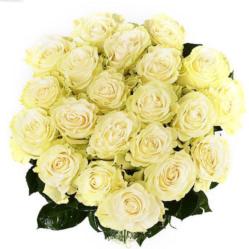 21 роза Mondial