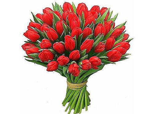 тюльпан 45