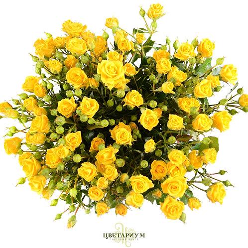 21 кустовая роза Shine