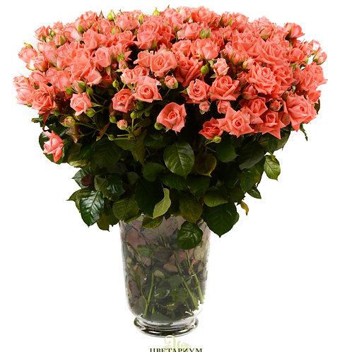 101 кустовая роза Barbados