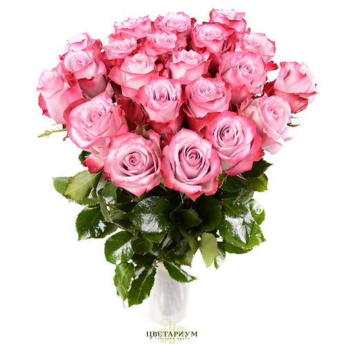 21 роза Deep Water