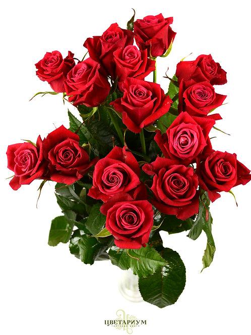 15 роз Shangri-la `