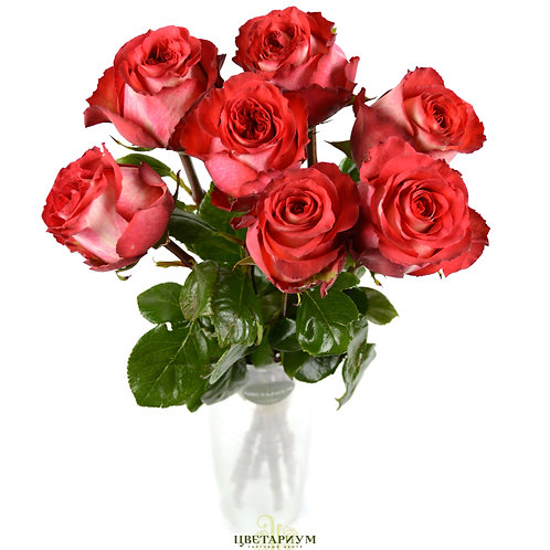7 роз Iguazu