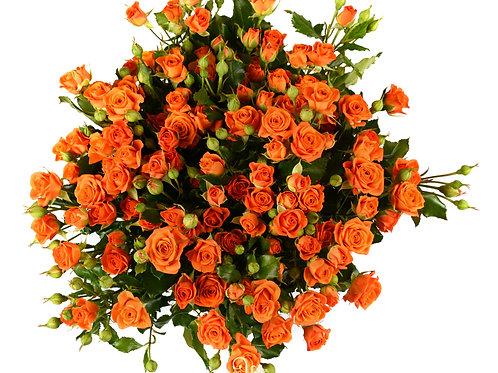 35 кустовых роз Babe