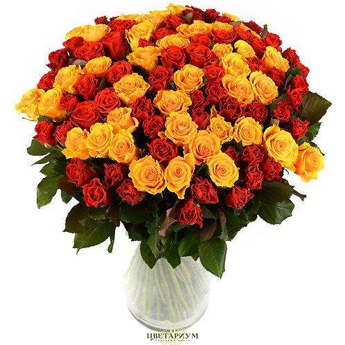 101 роза El Toro  и Sphinks Gold