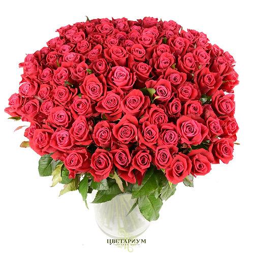 101 роза Shangri-la