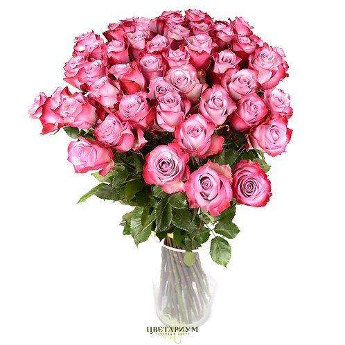 51 роза Deep Water