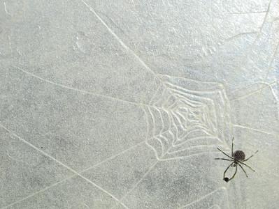 Paravent - Précieuses araignées