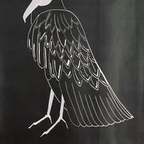 The Black Vulture ( Black )