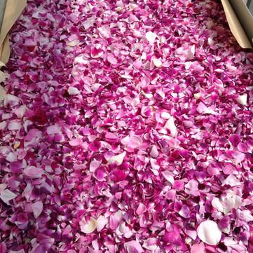 Drying damask rose petals