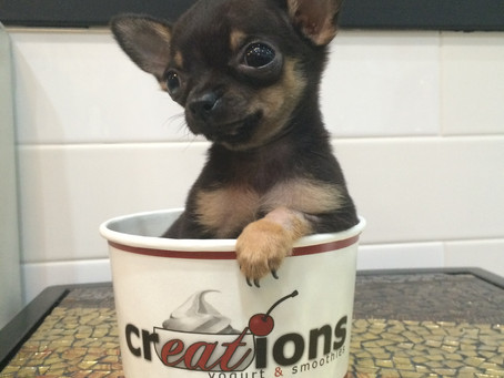 Creations Frozen Yogurt Finds Mascot