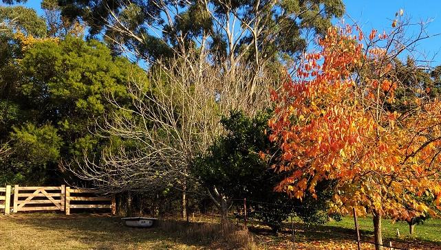 Autumn beauty at Mirador