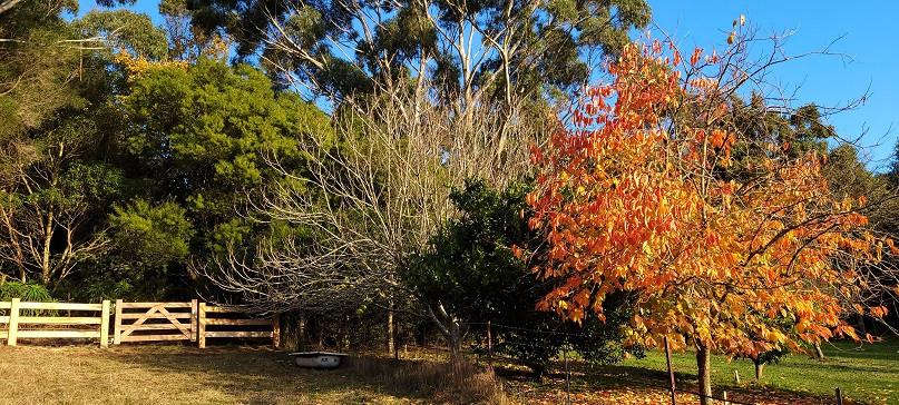 Autumn beauty at Mirador.jpg