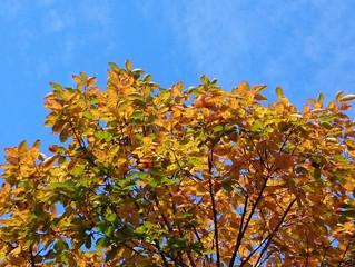 秋の散歩をしながら、綺麗を考える。