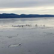 Promenade glaciale