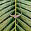 Thumbnail: FONU Salawai Necklace