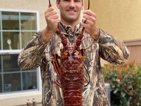 Ins & Outs of Giant Lobster