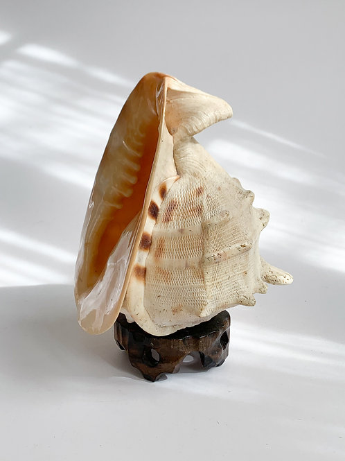 Conch Shell on Pedestal