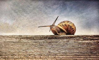 Snails: The Latest Fountain Of Youth!