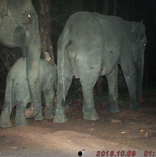 Family group leaves the forest late one