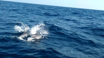 01. Marine & Wildlife Program.jpg