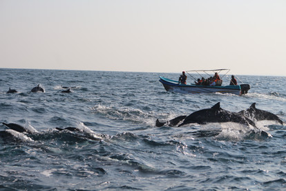 04. Marine & Wildlife Program.JPG