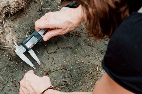 A volunteer measures small cat prints as part of our wildlife research