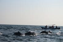 05. Marine & Wildlife Program.JPG