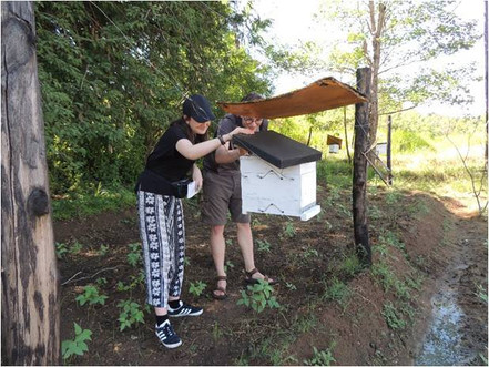 Sophie_Omer_Mcwalter_Monitoring_Beehive_