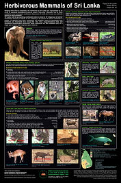 Mammals_of_SL preliminary-2_2-7-7.jpg