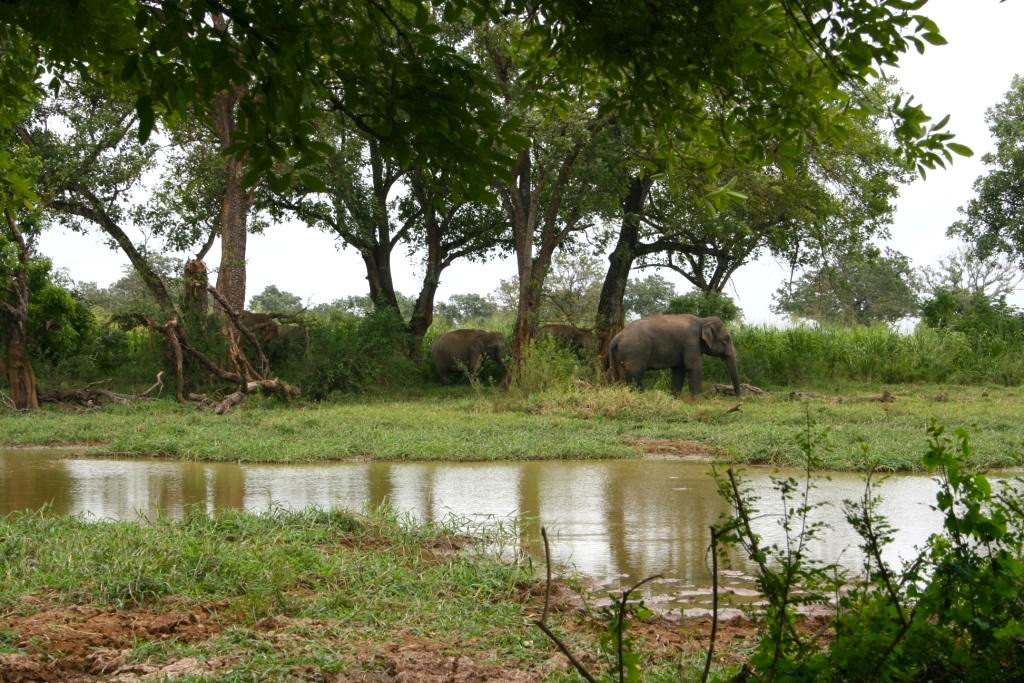 An elephant herd at a waterhole in the f