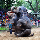 Elephant performing for a crowd