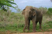 Ws-Har-FM-Elephant__1_.jpg