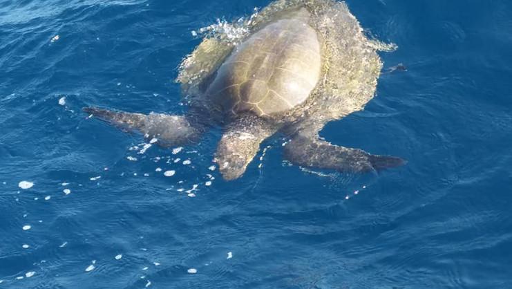 02. Marine & Wildlife Program.jpg