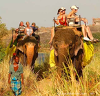 Sri Lankan elephants giving rides to tourists