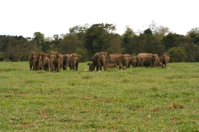 An elephant herd in the floodplains.jpg