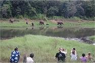 Sophie_Omer_Mcwalter_Observing_Elephants