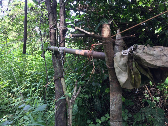 Trap gun set for elephants in the forest