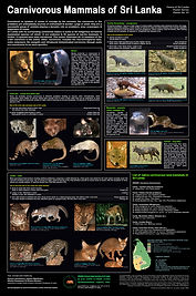 Mammals_of_SL preliminary_2-7-7.jpg