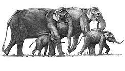 SLWCS Elephants Logo- 2019 .jpg