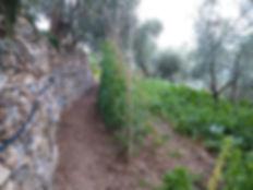 orto azienda agricola Raimondo Gisella Paravenna Garlenda
