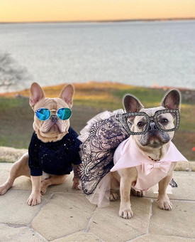 Stylish dogs lead with Fashion on NATIONAL DOG DAY!
