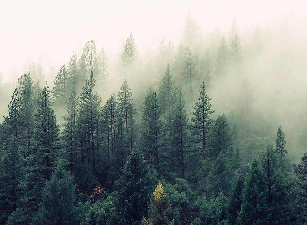 bosque.webp