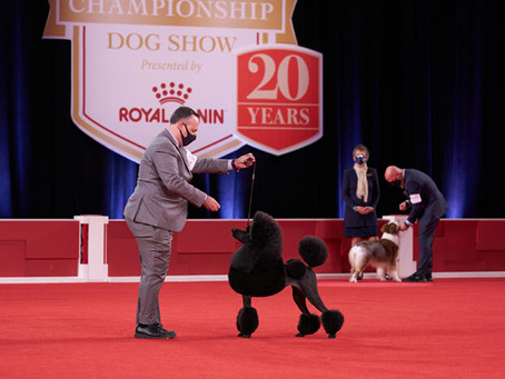 Maven Tracker to Exhibit at the AKC Nationals.