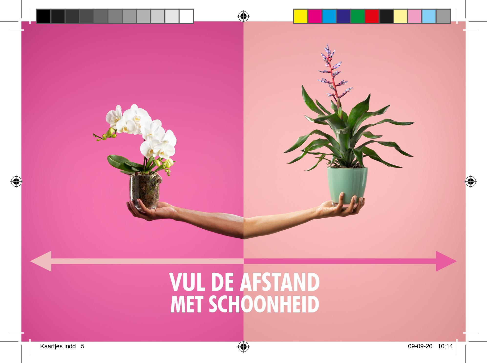 Drive thru kaart 2 - Bloemenbureau Holland