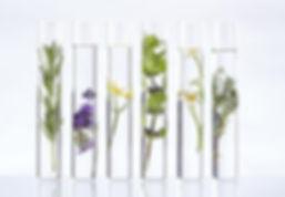 fitoterapie plante medicinale.jpg