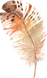 feather_10.png