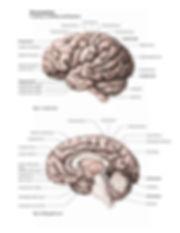 final-brain-01-01.jpg
