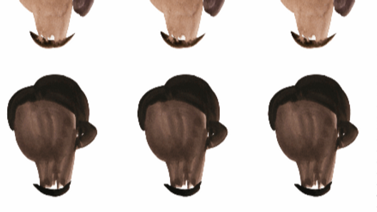 Shades of Brown LADIES Stickers