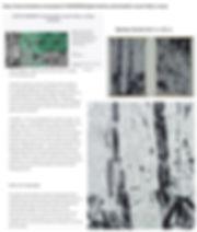 Digital Bamboo jpg.jpg